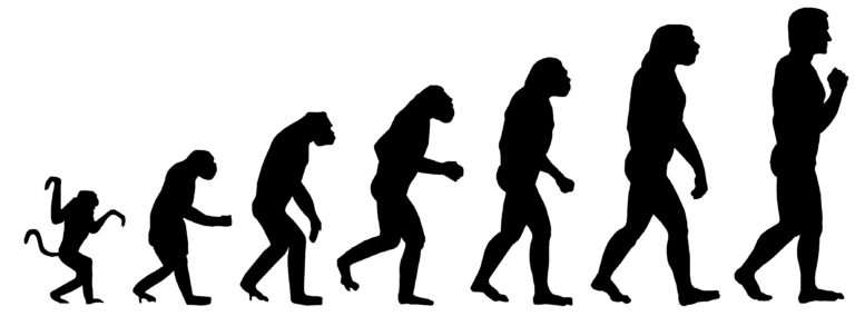 Human are really driving evolution of animals ?